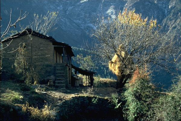Photo of  an Uttaranchal house, with hay stacked in a tree